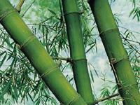 bambu arquitectura