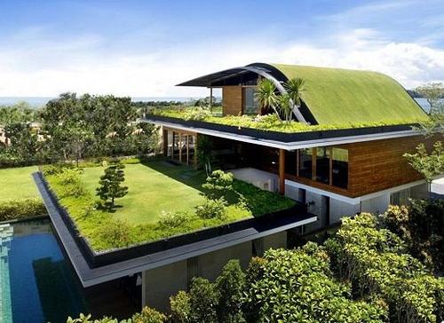 techos verdes azotea