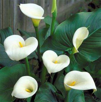 el verde es un gran color y la palma chamaedorea la aglaonema o el ficus trenzado son algunas de las mejores plantas de interior que se puede sembrar