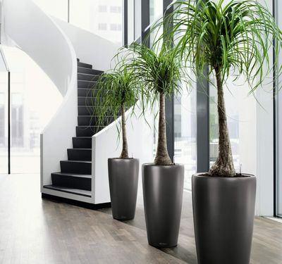 Mejores plantas de interiores para el hogar - Plantas de interior grandes ...