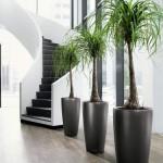 Mejores Plantas de Interiores