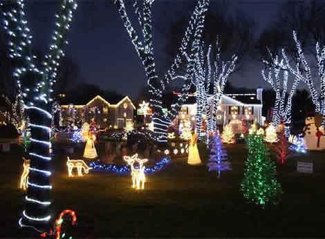 luces navideñas alrededor troncos