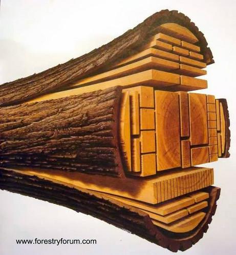 tronco de madera cortes