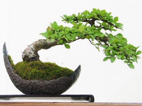 orme de chine en poterie demi-lune