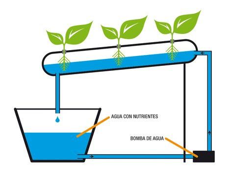 Hidroponia o cultivos sin tierra definicion usos y for Imagenes de hidroponia