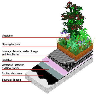 techo verde1