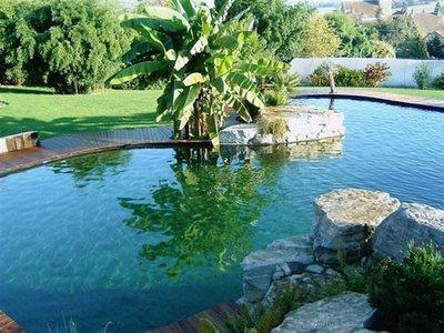piscina-natural-o-piscina-ecologica