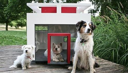Caseta para Perros – aspectos a considerar al comprar una