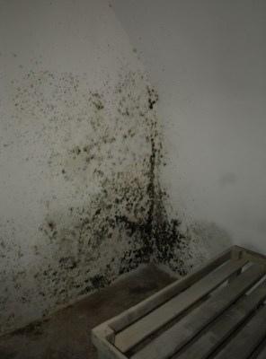 hongos en paredes