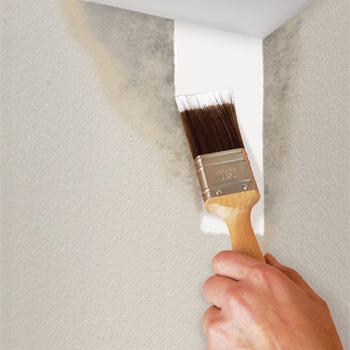 anti-mould-paint1