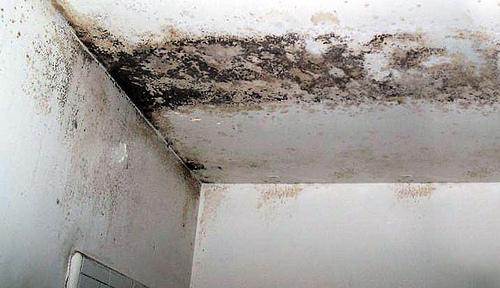 Pinturas Anti Mohos – Evita  la formación de hongos en paredes